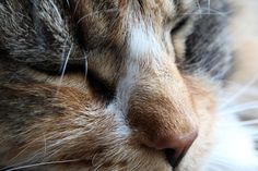 #kat #cat