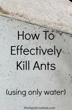 How to effectively kill ants using only WATER! This tip works! #chemicalfree {lifeshouldcostless.com}