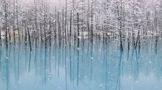 It snows in the blue pond. Blue pond in Biei,Hokkaido,Japan.