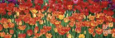 Tulips in a Garden, Botanical Garden of Buffalo and Erie County, Buffalo, New York, USA Photographic Print by Panoramic Images at Art.com