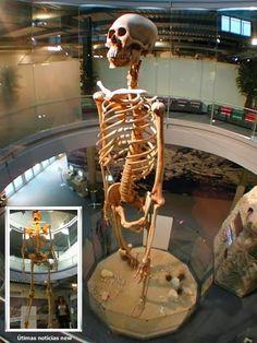 El olvidado Gigante de 7 metros de Ecuador se exhibe en el Mystery Park, Suiza - NOTICIAS NEWS