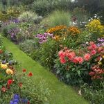Top 10 self seeding annuals for borders