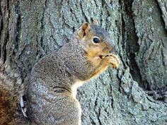 Natural Homemade Squirrel Repellent