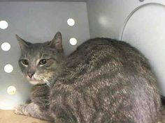 TO BE DESTROYED 5/3/14Manhattan CenterMy name is SCRATCHY. My Animal ID # is A0997583. UPDATE: ***GONE BUT NOT FORGOTTEN***