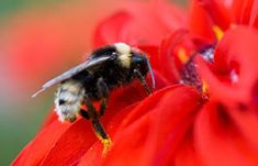 A simple article about how to attract bees to your garden