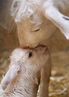 The cutest kisses in the animal kingdom are right here. Get ready for some aaaaaaaawwwwwwwwwws.