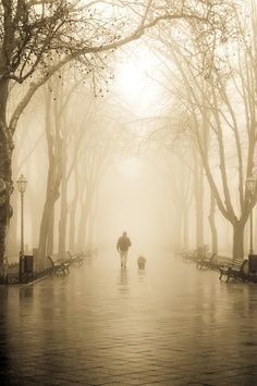 ♂ Solo man tree dog foggy on the road