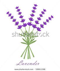 Image result for stock photo lavender vector
