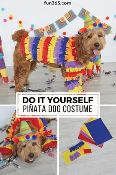 Diy costumes 7670261851628801 - Don't leave out the dog on the Halloween fun! We have the perfect DIY costume for your furry friend. This DIY Piñata Dog Costume is easy to make and simply adorable. Source by craftingchicks Best Dog Costumes, Puppy Halloween Costumes, Easy Diy Costumes, Pet Costumes, Halloween Diy, Pinata Costume Ideas, Diy Costumes For Dogs, Chien Halloween, Boy Dog