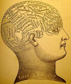 The photo is an illustration of the brain. It shows that certain brain areas have specific functions which in turn control personality traits.