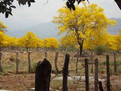 Arboles de Cañaguate Villanueva-Cesar Outdoor Furniture, Outdoor Decor, Park, Lakes, Colombia, Jungles, Beautiful Landscapes, Waterfalls, Earth