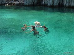 Top dog friendly beaches in Croatia Small Pine Trees, Shade Tent, Dog Shower, Dog Friends, Beaches, Water, Dogs, Travel, Gripe Water