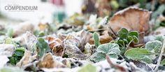 365 Tage Fotochallenge: Tag 333 - Frostige Zeiten
