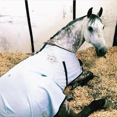 "492 Likes, 13 Comments - The Fit Equestrian (@thefit.equestrian) on Instagram: ""mood: when you're alarm goes off early on a sunday morning """