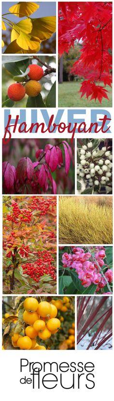 Animer et colorer le jardin à la morne saison : découvrez cette ambiance en détail sur le site de promesse de fleurs. #jardin #hiver
