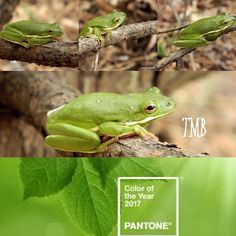 "Pantone color of the year 2017...GREENERY....a "" zesty yellow green shade that evokes the first days of spring."" Inspired by the desire to reconnect with nature. Symbolizes a new beginning.  COMING SOON...Pantone color of the year 2017....GREENERY PREVIEW! www.creationsbytoni.etsy.com or www.creationsbytonimbrundage.com #FreeShippingInUS #freegiftwithpurchase #sale #bohojewelry #accessories #womensfashion #giftsforher #jewelry #etsyseller #etsyshop  #etsy #naturalandorganic #naturelover…"
