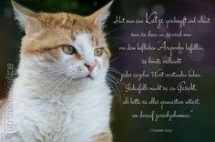 Hat man eine Katze geschimpft und schaut… #spruchbilder #spruchbilderkatzen #katzenspruchbilder #katzensprüche #katzenzitate #katzenweisheiten