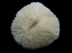 Fungi Coral #AirNZWOW #WOW #WeirdSealife #Whatliesbeneath