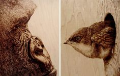 julie bender pyrography | Wood Burned Wildlife