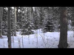 The Healing Music Of Tai' Chi Gung: Colorado Snow