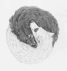 wolf drawings | yin and yang wolves by mysteriouswhitewolf ...