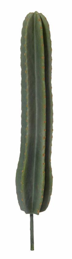Column Cactus