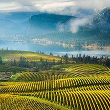 Blue Mountain Vineyard (Adam Gibbs photo)