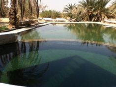 the water spring in the oases