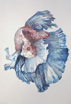 Ana Inés Cohen: Sin titulo* Pez beta. Acuarela Watercolor