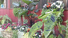 Unique combination of plants.