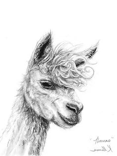 K Llamas - Thomas Alpacas, Alpaca Cartoon, Alpaca Drawing, Llama Pictures, Turtle Facts, Llama Face, Llama Arts, Cute Alpaca, Animal Art Projects