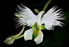 Phong lan đẹp