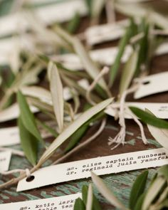 Escort card tags typed with a vintage typewriter are tied to olive branches -- an extension of the a dove wedding theme.
