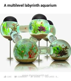 Aquarium Pet Baby Dragon! How cool would this be to have in your ...