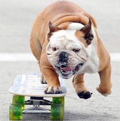 Cani che non hanno bisogno dei loro padroni. #dogs #funny