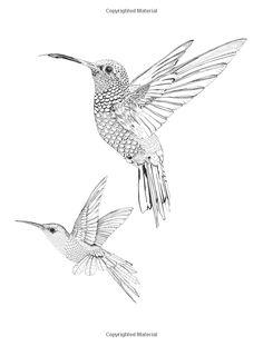 New Humming Bird Sketch Hummingbird Drawing Adult Coloring Ideas Hummingbird Drawing, Hummingbird Tattoo, Bird Drawings, Animal Drawings, Adult Coloring Pages, Coloring Books, Bird Sketch, Wood Burning Patterns, Bird Pictures