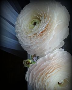 Holland flowers ranunculus, beautiful flowers, flower story, flowers are my life