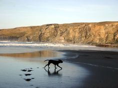 Deserted dog-friendly beaches - Trebarwith Strand, North Cornwall (local beach to Rooky's Nook! Dog Friendly Holiday Cottages, Pet Friendly Holidays, St Ives Cornwall, North Cornwall, Places In Cornwall, Cornwall Cottages, Holidays In Cornwall, Brecon Beacons, Whippets