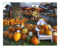 Planting Pumpkin Seeds, Pumpkin Plants, Pumpkin Trellis, Outside Fall Decorations, Giant Pumpkin, Pumpkin Farm, Maine, Autumn Display, Fall Displays