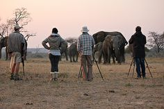 If you are a keen photographer, amateur or professional you would be challenged to find more compelling subjects. Marc Riboud, Taking Pictures, Safari, Elephant, Challenges, Life, Animals, Animales, Animaux