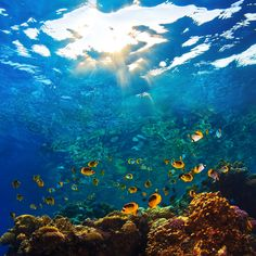 Fisk Koraler Tropiske fisk fototapet/tapet fra Happywall