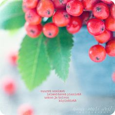 Kortti; Pihlajanmarjat | Anna-Mari West Photography Finnish Words, Enjoy Your Life, What Is Life About, Poems, Messages, Thoughts, Feelings, Cards, Helsinki