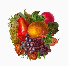Antique Images: Free Digital Fruit Clip Art: Pear, Grape, Lemon, Apple, and Walnuts Graphic
