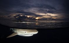 Split Shot Underwater by Steve Miller For All My Life, Beneath The Surface, Underwater Photography, Sharks, Palm Trees, Diving, Study, Fish, Palm Plants