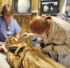 Specialists prepare to use endoscopy to examine an 18th century mummy from a church crypt in Vác, Hungary.