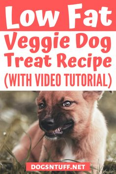 In this article, we're going to share with you how to make a homemade vegetarian dog treat. #veggiedogrecipe #dogfood #dogrecipes Almond Recipes, Dog Food Recipes, Carrot Dogs, Sources Of Dietary Fiber, Veggie Dogs, Dog Facts, No Calorie Snacks, Dog Rules, Dog Biscuits