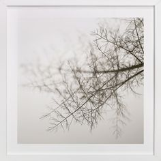 """""""Wild Fennel Study No. 1"""" - Available in a variety of frame and size options"""