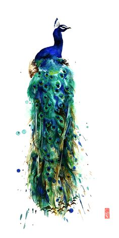 There are few animals more beautiful and mysterious than the peacock. I've always admired their royal plumage and graceful arches.   Giclée paper and canvas prints of this watercolor painting is available at my Etsy shop from $25.00.