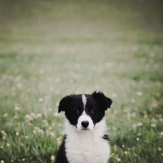 Maybe I'm dreaming. on we heart it / visual bookmark #23841071 (puppy,dog,photography,cute)