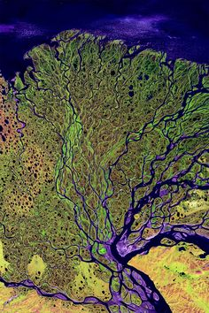 Satellite image of the Lena river delta, one of the largest rivers in the world. The Lena Delta Reserve is the most extensive protected wilderness area in Russia. It is an important refuge and breeding grounds for many species of Siberian wildlife. Earth And Space, Satellite Photos Of Earth, Earth Photos, Photo Voyage, Birds Eye View, Aerial Photography, Earth Day, Aerial View, Oeuvre D'art